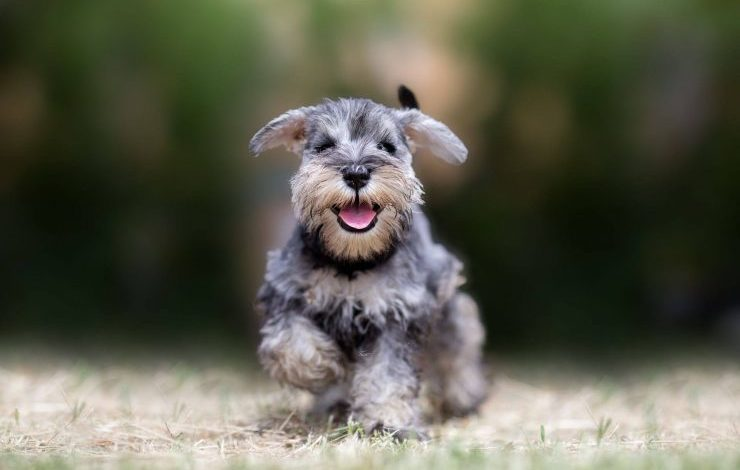 Arapça Köpek İsimleri