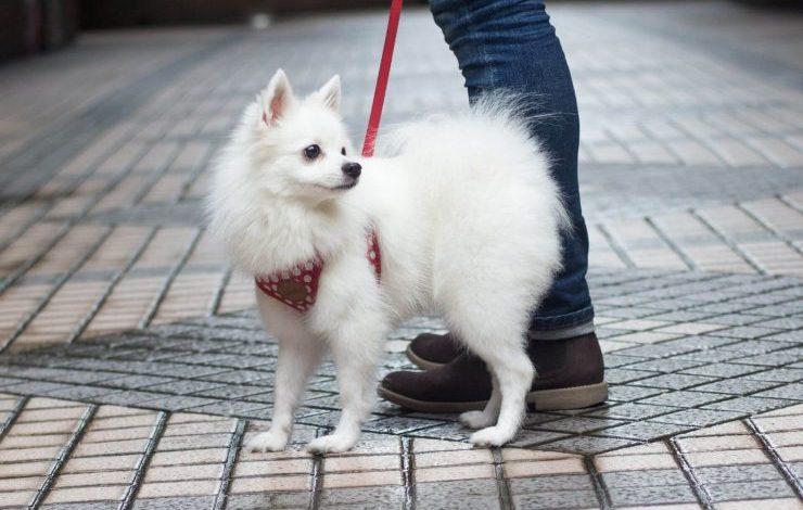 Beyaz Köpek İsimleri
