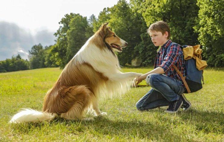 Filmlerdeki Köpek İsimleri