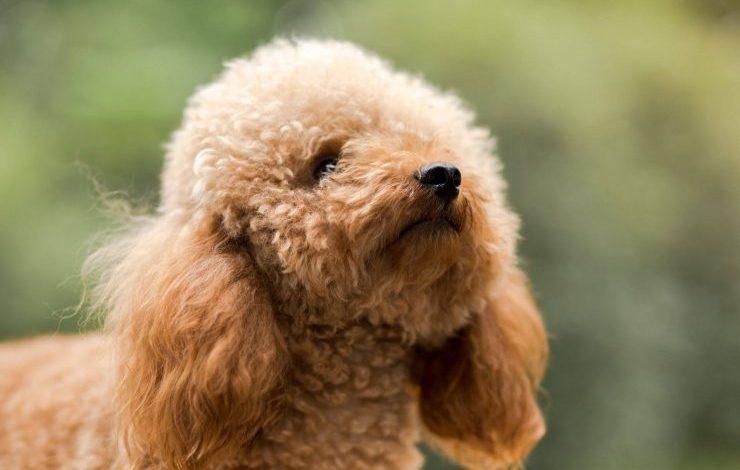Fino Köpek İsimleri