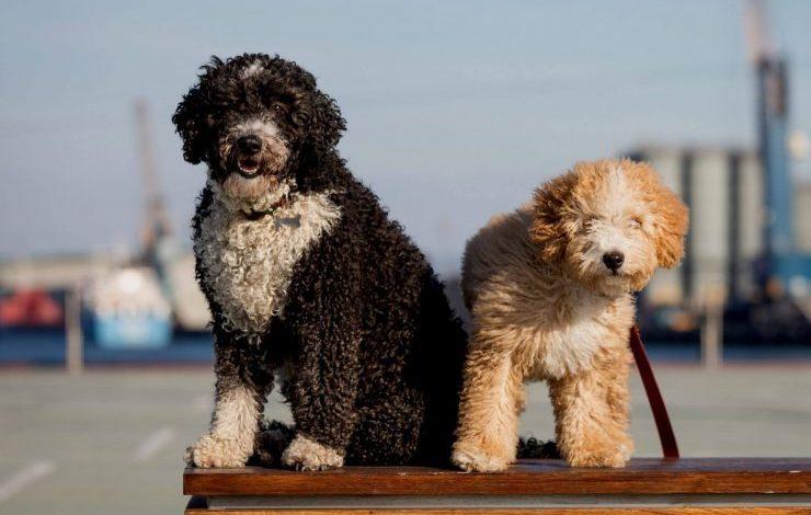 İspanyolca Köpek İsimleri