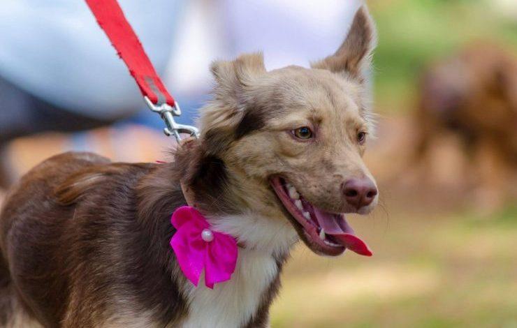 En Güzel İtalyanca köpek isimleri