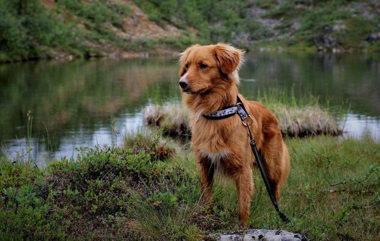 Kahverengi Köpek İsimleri