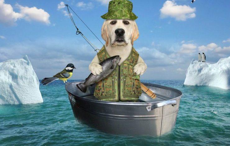 Köpekler Balık Yer mi?