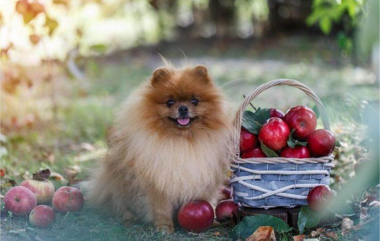Köpekler Elma Yer mi?