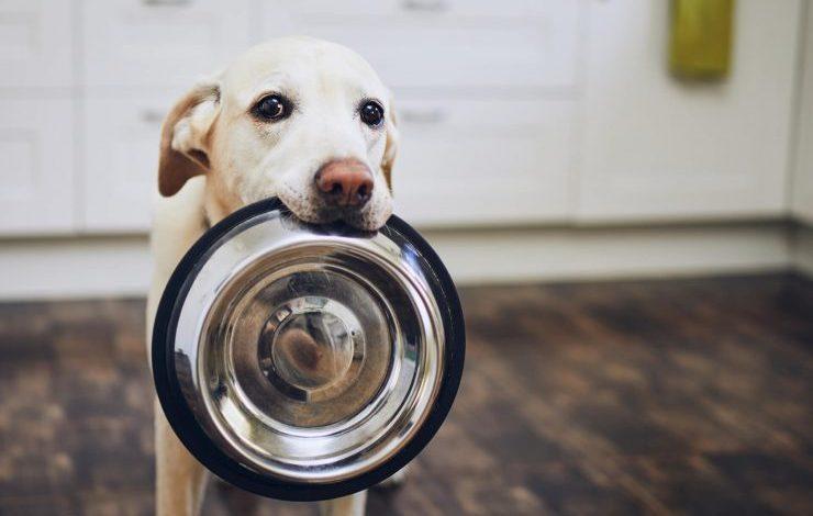 Köpekler Günde Kaç Öğün Yemek Yemeli?