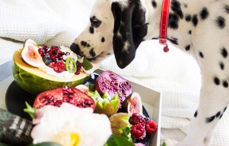 Köpekler Meyve Yer mi?