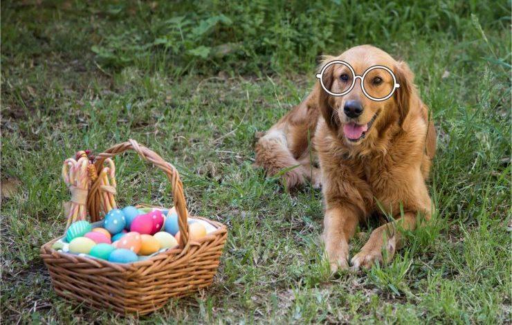 Köpekler Yumurta Yer mi?