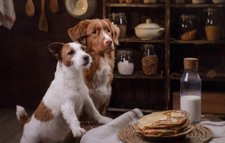 Köpeklere Ev Yemeği Verilir mi?