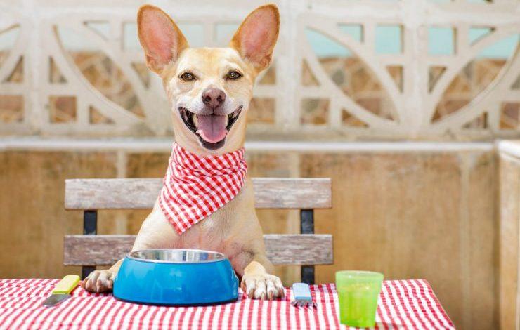 Köpeklerin Yiyebileceği Ev Yemekleri Nelerdir?