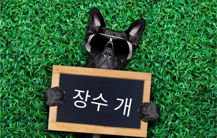 Korece Köpek İsimleri