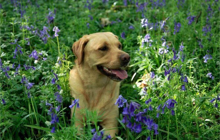 Kulağa Hoş Gelen Köpek İsimleri