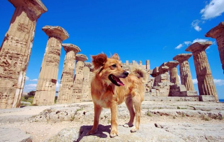 Mitolojik Köpek İsimleri
