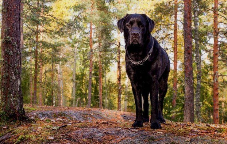 Siyah Köpek İsimleri
