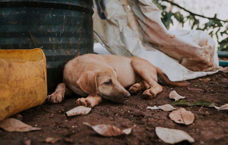 Sokak Köpekleri Şikayet