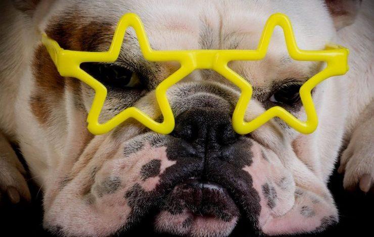 Ünlülerin Köpek İsimleri Ünlü Köpek İsmi
